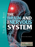 The Human Body: The Brain and the Nervous System