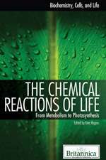 Biochemistry, Cells, and Life: The Chemical Reactions of Life: From Metabolism to Photosynthesis
