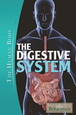 The Human Body: The Digestive System